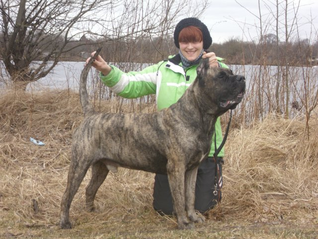 Собаки Татьяны Моисеенковой, кот Мензурка - Страница 3 32c99328485c