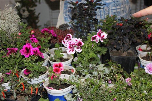 XIX Международная выставка Ландшафт и Приусадебное хозяйство-2012 9a1d1f5cd5e3