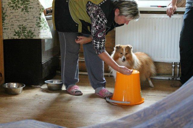 Недельные курсы повышения квалификации для собакообожак :-) Приглашаем всех!!! - Страница 3 Eb34670024f3