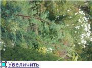 Cад Людмилы Ивановой из черкасс A2b8caa5afbft