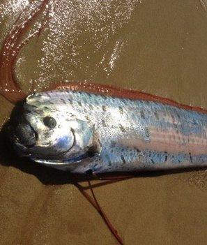 Ремень-рыба 038a1cb5ed0c