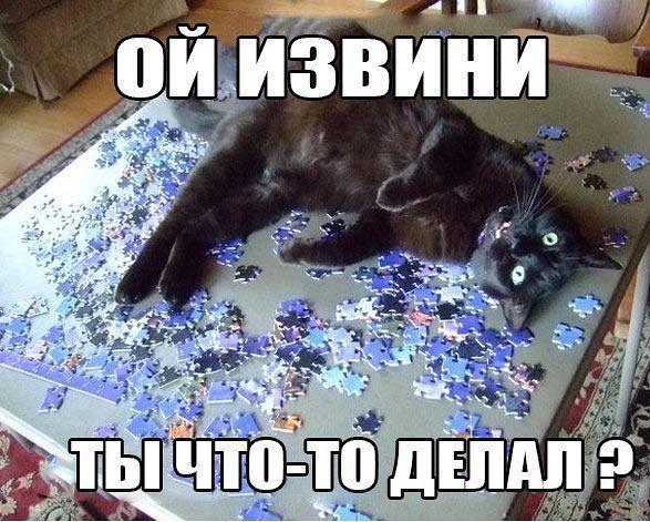 Кошачий юмор Cb0365cc2c1d