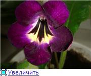 """""""Цветочки на окне - очей очарованье..."""" - Страница 2 C21a55ea33f9t"""