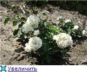 Лето в наших садах - Страница 3 5dc58506952at