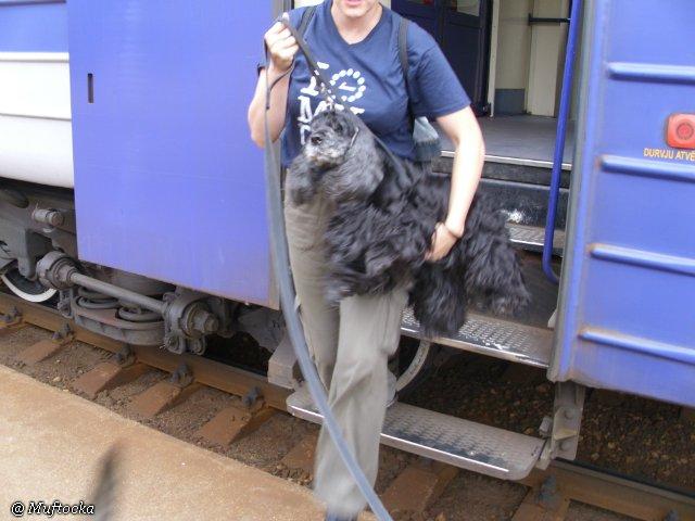 Наши собаки, друзья и гости, кот Мензурка 3c1f542876ec