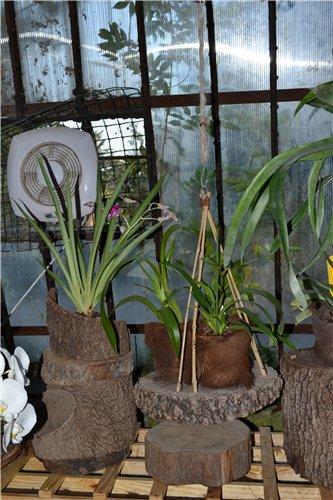 Выставка орхидей Никитского ботанического сада 926fb9f0e153