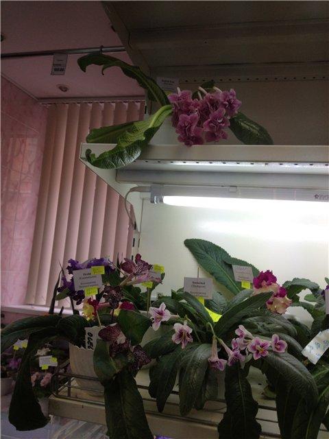 Выставка цветов Cbfd02e6581d