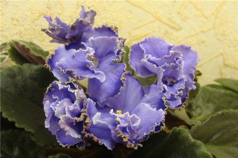 Весеннее  цветение (Хваст от Веры) - Страница 9 62252049ee3d