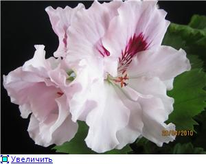 Красота без границ - Страница 6 F984ea419a71t