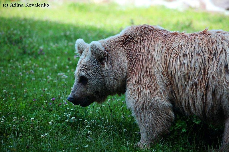 Швейцарский зоопарк 5e5015bf05a6