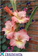 Лето в наших садах - Страница 6 2212ba65bf72t