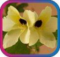 продам семена экзотических растений - Страница 3 D46762a9e92d