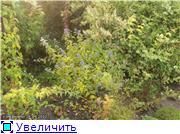 Cад Людмилы Ивановой из черкасс C15db30f502dt