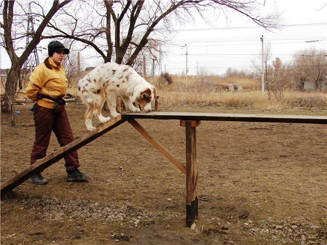 "Питомник ""Aurum Dog"" - Страница 5 Fc4622eb76b4"