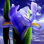 Аватары с цветами - Страница 2 Feb9969d9498
