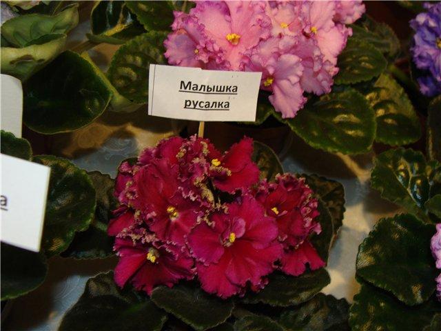 Международая выставка «Цветы.Ландшафт .Усадьба 2010» Астана - Страница 4 26f5c60f2b25