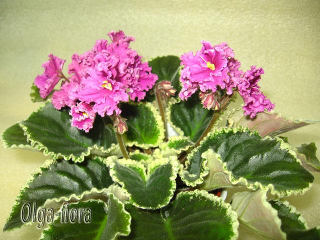 Цветение к Н. Г. (Olga-flora) - Страница 6 Acae273c136a