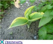Лето в наших садах E4eb71238d57t
