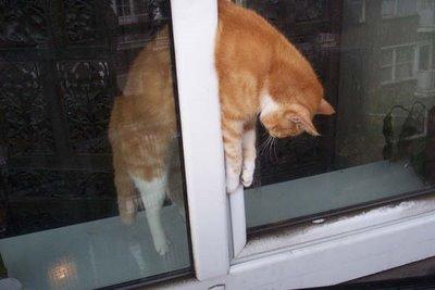Resumen de ideas para mosquiteras y redes ventanas y balcón para gatos. Fb66dda1f9f4