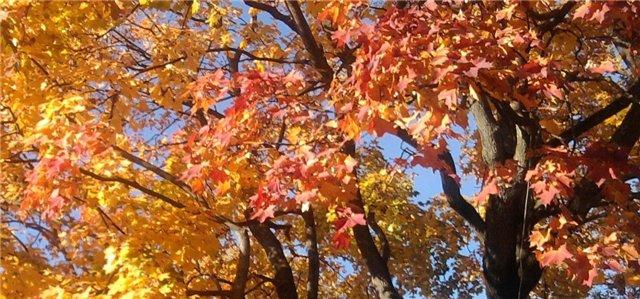 Осень, осень ... как ты хороша...( наше фотонастроение) - Страница 4 Ffe4a1872a2c