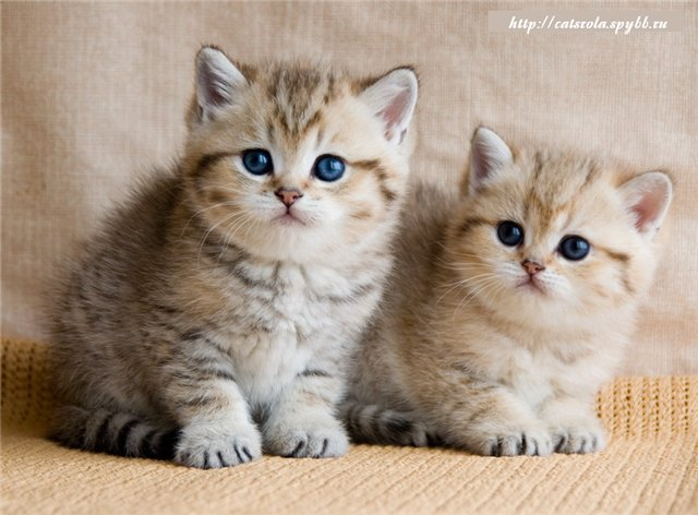 кошки 22ac30452e3f