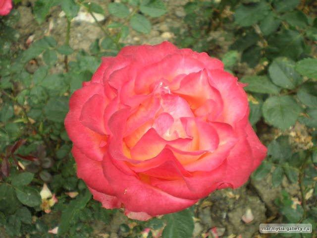Крым. Никитский ботанический сад. - Страница 2 4c860bd2f98c