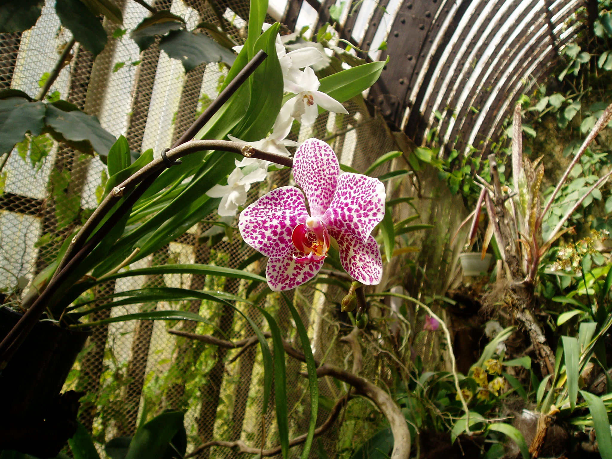 Выставка Орхидей Be0429d11c59