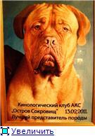 Arno de Bin`ol`-владелец Нечаев С.В. 8eb33255324et