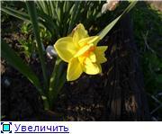 Весна идет, весне дорогу! - Страница 8 E2afd4ca6533t