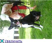 Чара - потрясающая собака! Ищет лучших хозяев! 542bf1b33aeat