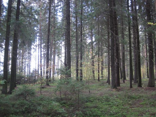 За грибами в Конаково (Тверская область, Волга)! E3637b067079