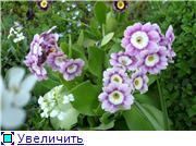 Растения для альпийской горки. - Страница 2 Ae0893541994t