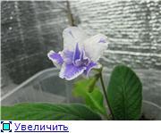 Семена глоксиний и стрептокарпусов почтой - Страница 3 4a447bcd8d2dt