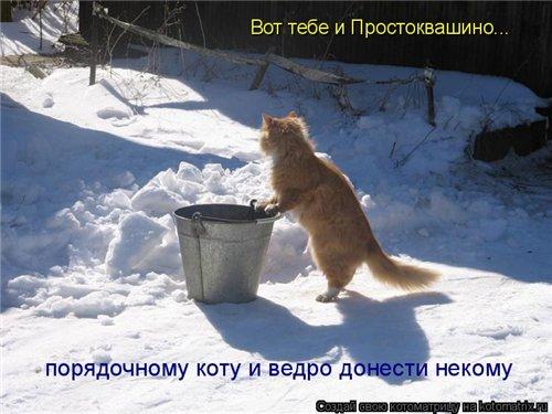 Фотографии кошек 00519055e2e2