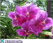 Орхидеи и прочая красота на о. Пхукет 1c9613fba441t