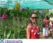 Орхидеи и прочая красота на о. Пхукет 348be99467aat