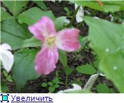 Растения для тени или Тенистый сад. 1becb2c9d51at