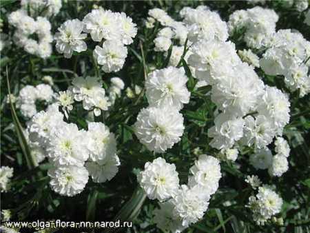 Многолетние растения 994c4eeb9e5a