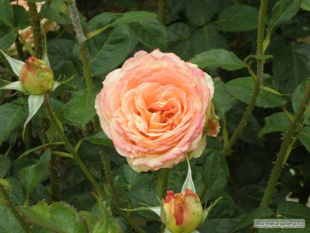 Крым. Никитский ботанический сад. 577590662e0f