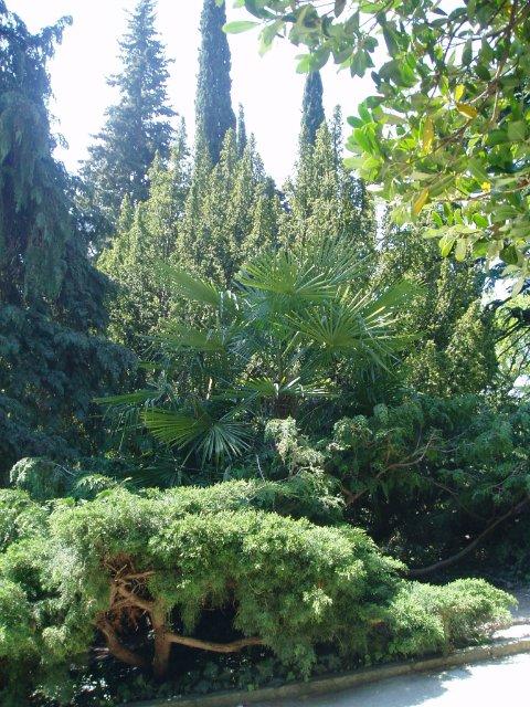 Крым. Никитский ботанический сад. 1f8fbf789a0f