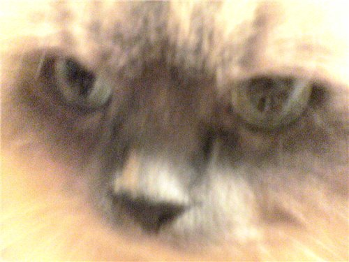 Наши домашние животные 1b11729bf75a
