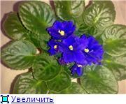 Продам цветущие фиалки в Алматы 86cc3ae8c81dt