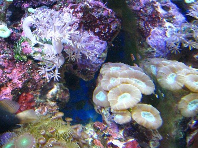 Аквариум. Море - Страница 6 5f877176306d