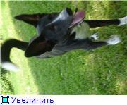 Чара - потрясающая собака! Ищет лучших хозяев! 5510e6680c7at