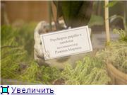 Выставка орхидей в Государственном биологическом музее им. К.А.Тимирязева 247493beb928t