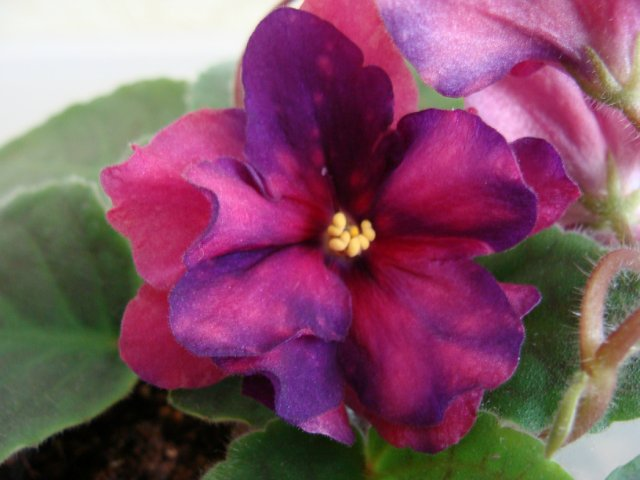 Мои цветочки - Страница 39 8c111acb0a56
