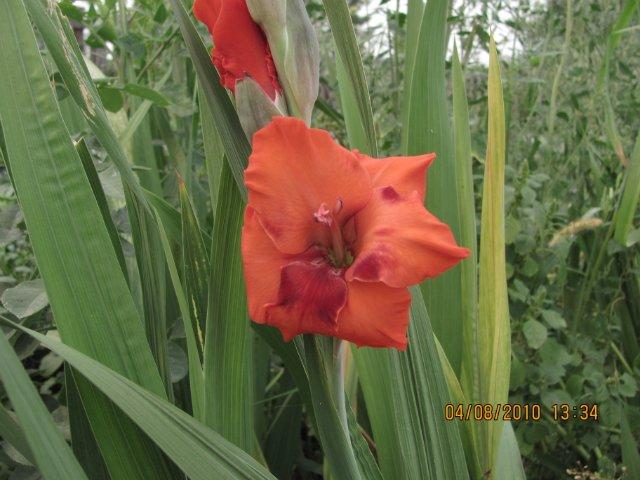 Мои садовые - Страница 2 89856617ac9c