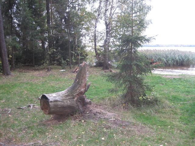 За грибами в Конаково (Тверская область, Волга)! 8e3caa07d580