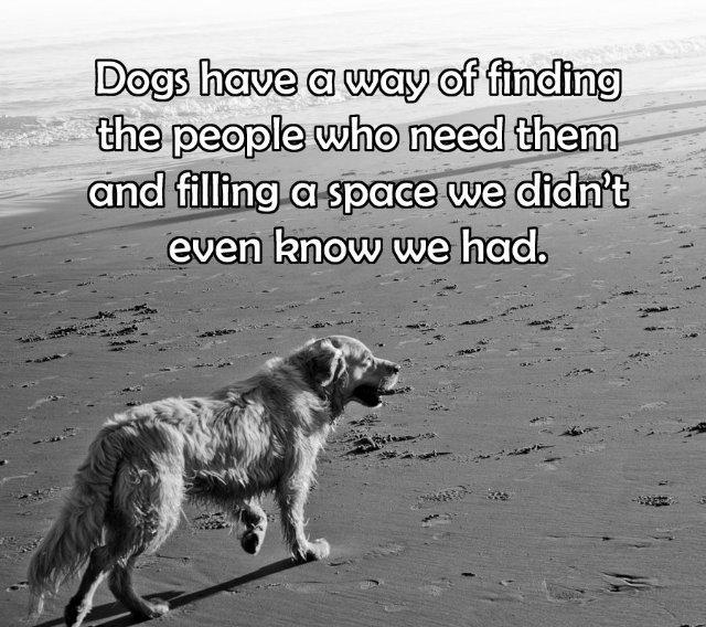 Литература о собаках, книги, рассказы, очерки.  - Страница 2 4ea05400ed4f