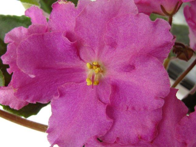Мои цветочки - Страница 23 2fba338f467c